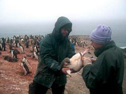 Pinguclim